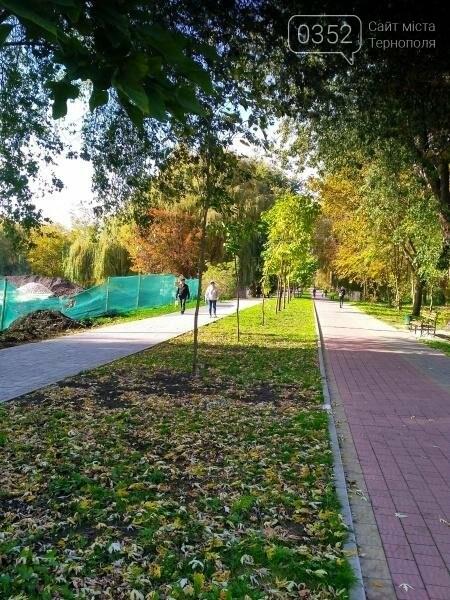 У Тернополі висадили найдовшу катальпову алею в Україні (фото), фото-1