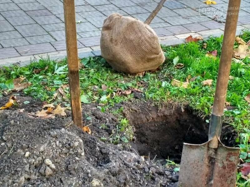 У Тернополі висадили найдовшу катальпову алею в Україні (фото), фото-3