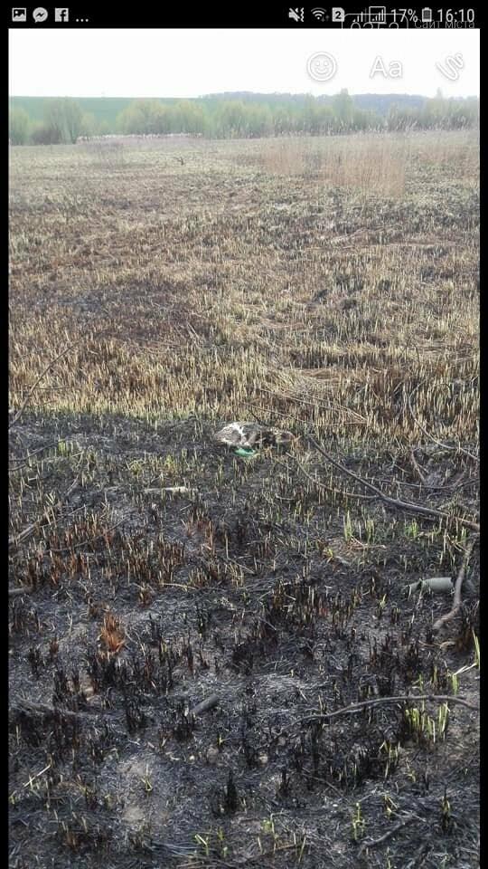 Тернополяни спалили безпритульну собаку (фото), фото-1