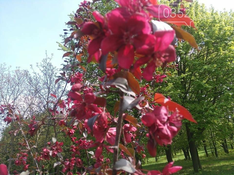 У тернопільському парку зацвіли райські яблуні (ФОТО), фото-2
