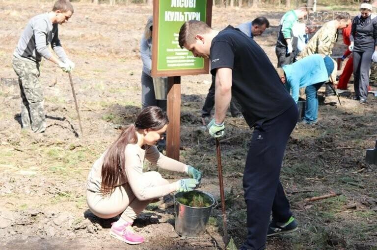 На Тернопільщині висадили близько 17 тисяч сосен (ФОТО), фото-1