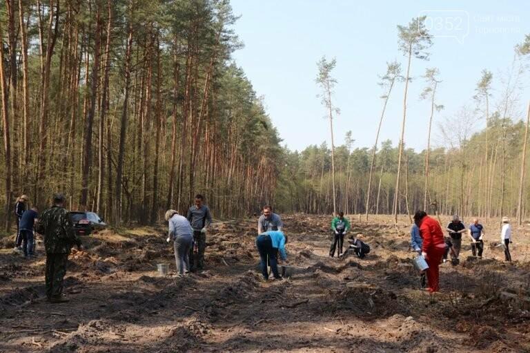 На Тернопільщині висадили близько 17 тисяч сосен (ФОТО), фото-4