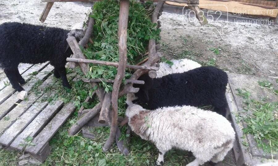 У Тернополі в гідропарку оселилися нові мешканці (фото), фото-1
