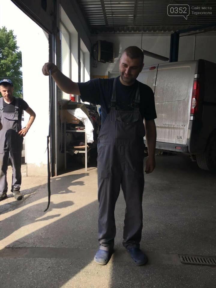Переполох на СТО: у Тернополі на ремонт привезли авто із живою змією у салоні (Фото, відео), фото-2