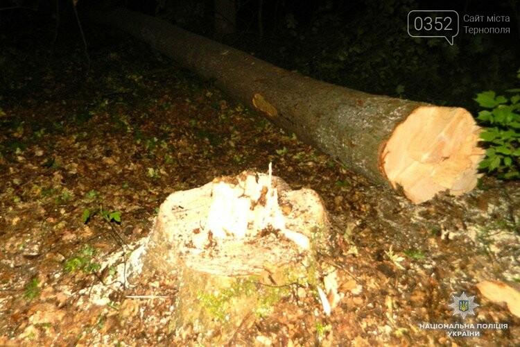На Тернопільщині незаконно рубали деревину задля виготовлення музичних інструментів (ФОТО), фото-1