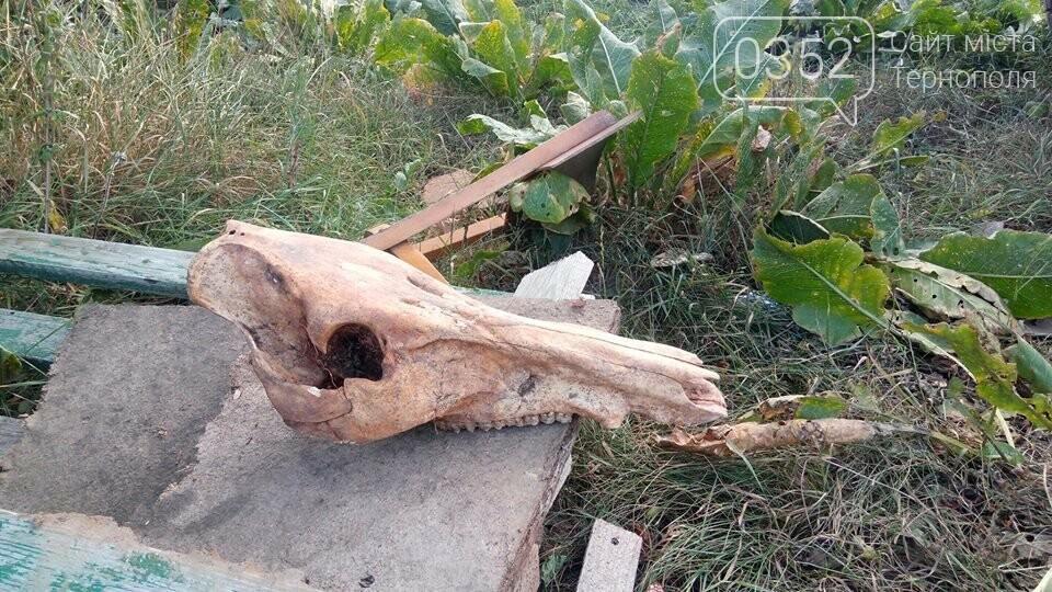 Мешканець Тернопільщини викопав череп невідомої істоти (ФОТО), фото-3