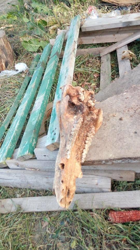 Мешканець Тернопільщини викопав череп невідомої істоти (ФОТО), фото-4