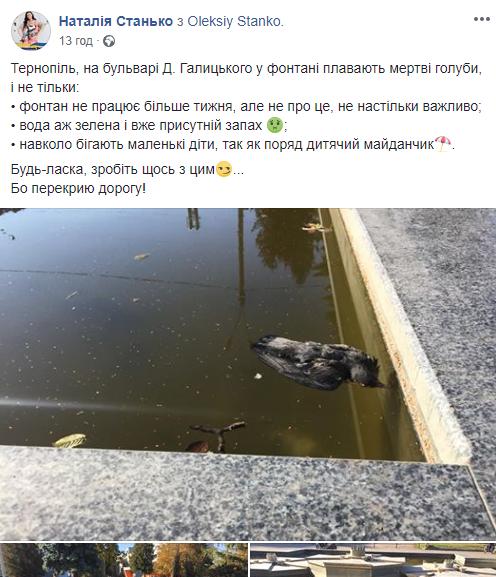 """""""Вже присутній запах"""": у тернопільському фонтані плавають мертві голуби (ФОТО), фото-1"""