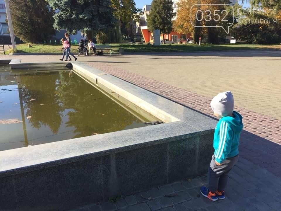 """""""Вже присутній запах"""": у тернопільському фонтані плавають мертві голуби (ФОТО), фото-4"""