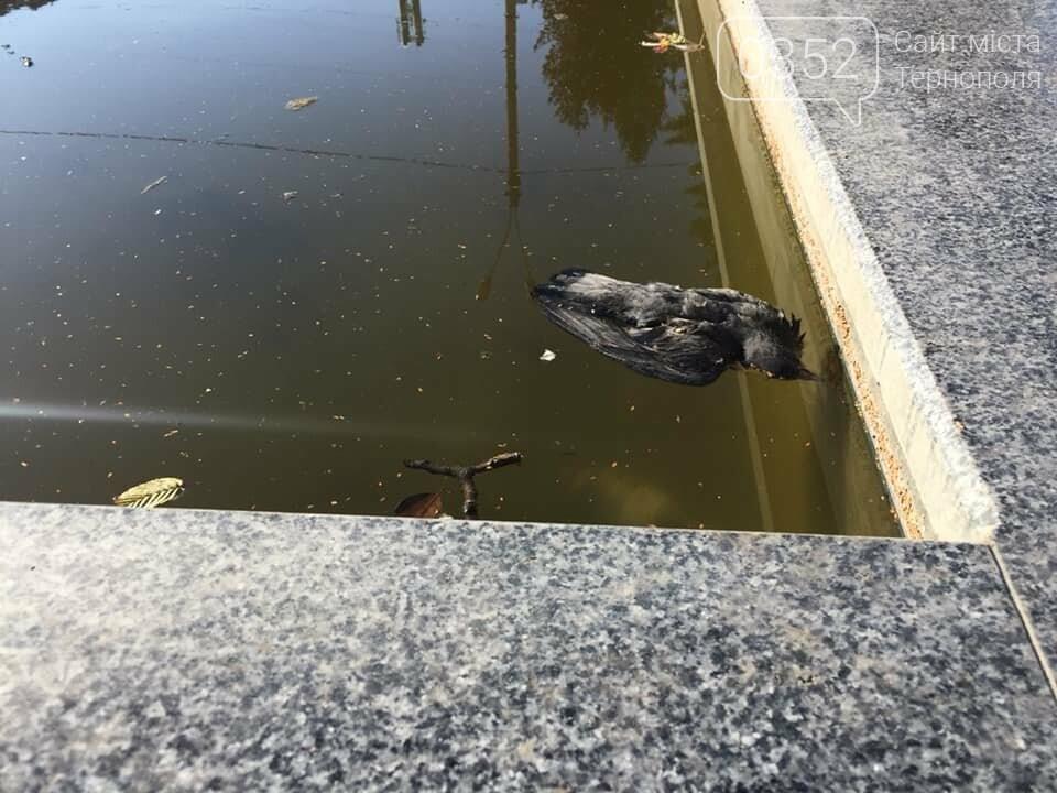 """""""Вже присутній запах"""": у тернопільському фонтані плавають мертві голуби (ФОТО), фото-2"""