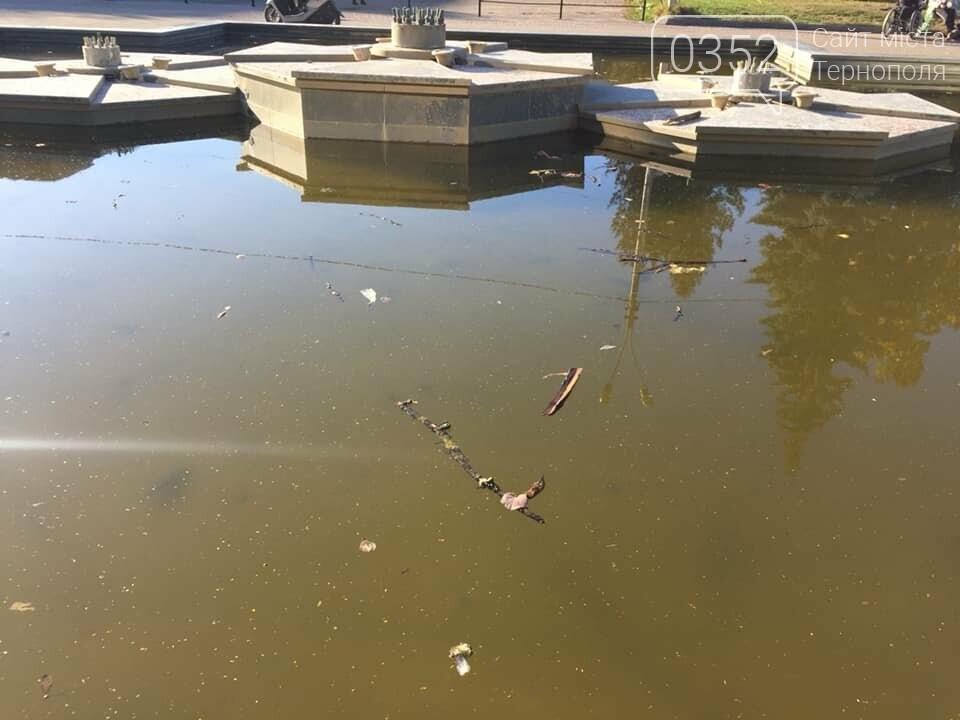 """""""Вже присутній запах"""": у тернопільському фонтані плавають мертві голуби (ФОТО), фото-3"""