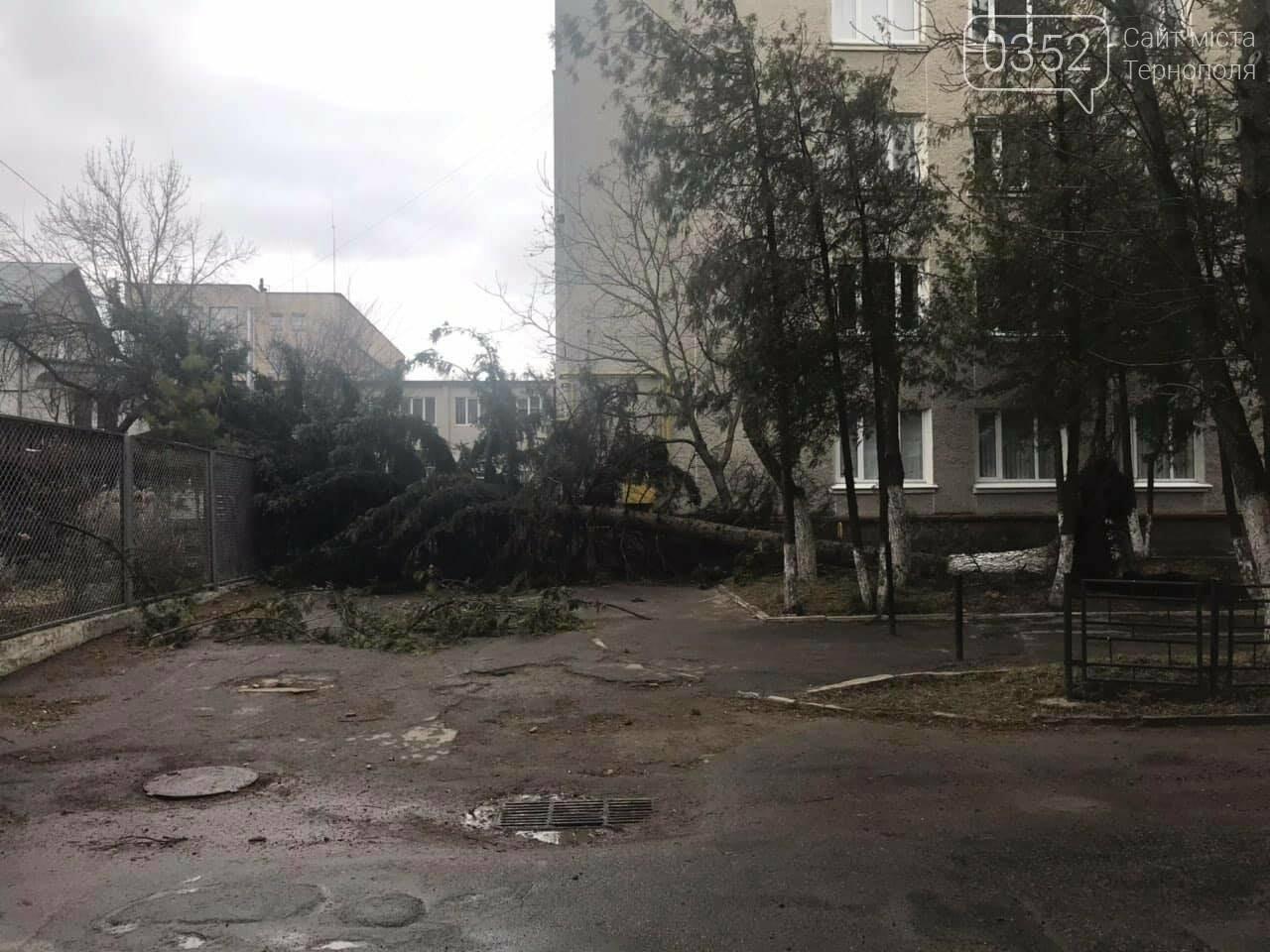 У центрі Тернополя  вітер з корінням вирвав величезну ялину (ФОТО), фото-1