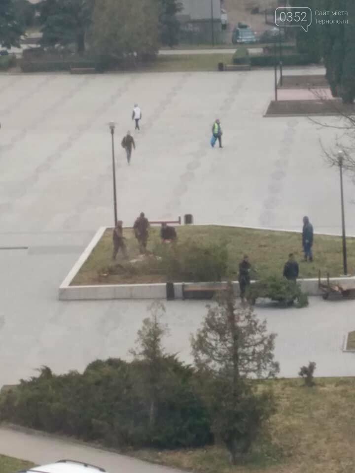 """""""Ще хвилину назад росли два дерева, через мить - гола клумба"""", - у Тернополі на площі навпроти ОДА вирізали ялини (ФОТО), фото-5"""