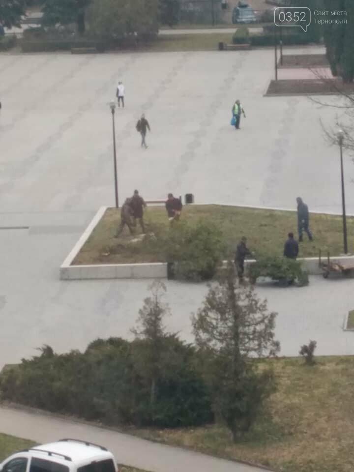 """""""Ще хвилину назад росли два дерева, через мить - гола клумба"""", - у Тернополі на площі навпроти ОДА вирізали ялини (ФОТО), фото-6"""
