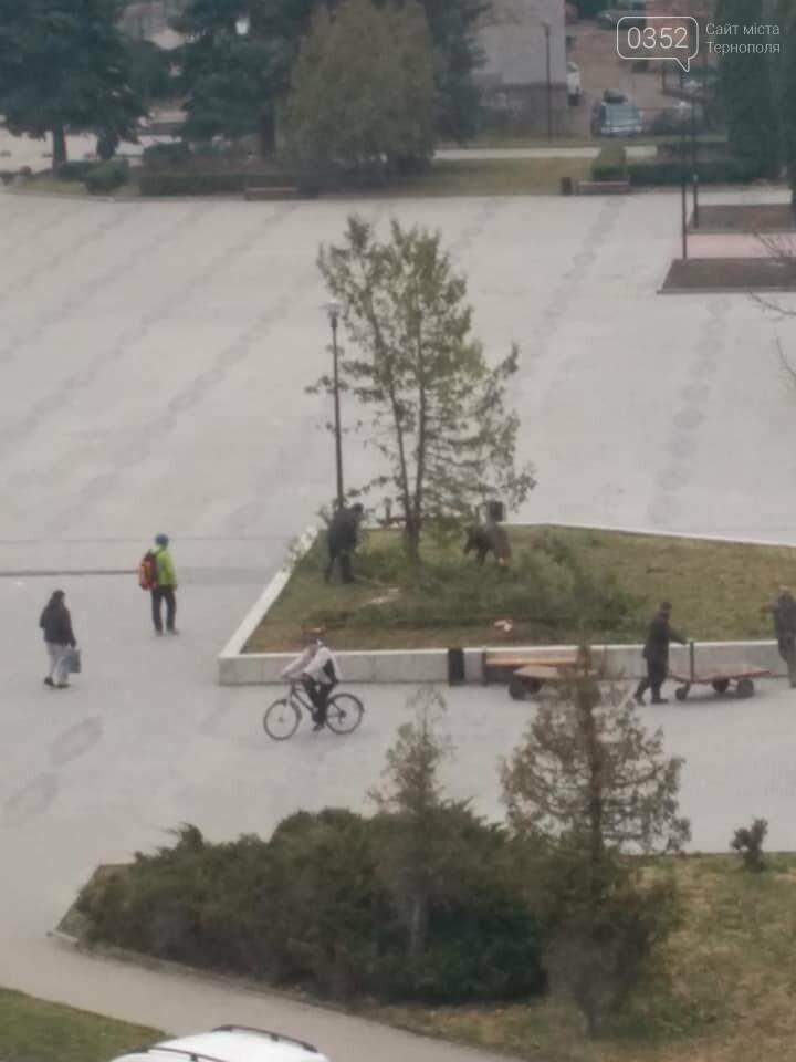 """""""Ще хвилину назад росли два дерева, через мить - гола клумба"""", - у Тернополі на площі навпроти ОДА вирізали ялини (ФОТО), фото-1"""