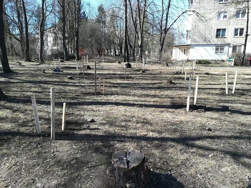 """У Тернополі місцеві мешканці разом з ГО """"Екоальянс"""" висадили більш як 100 молодих дерев (ФОТОФАКТ), фото-6"""