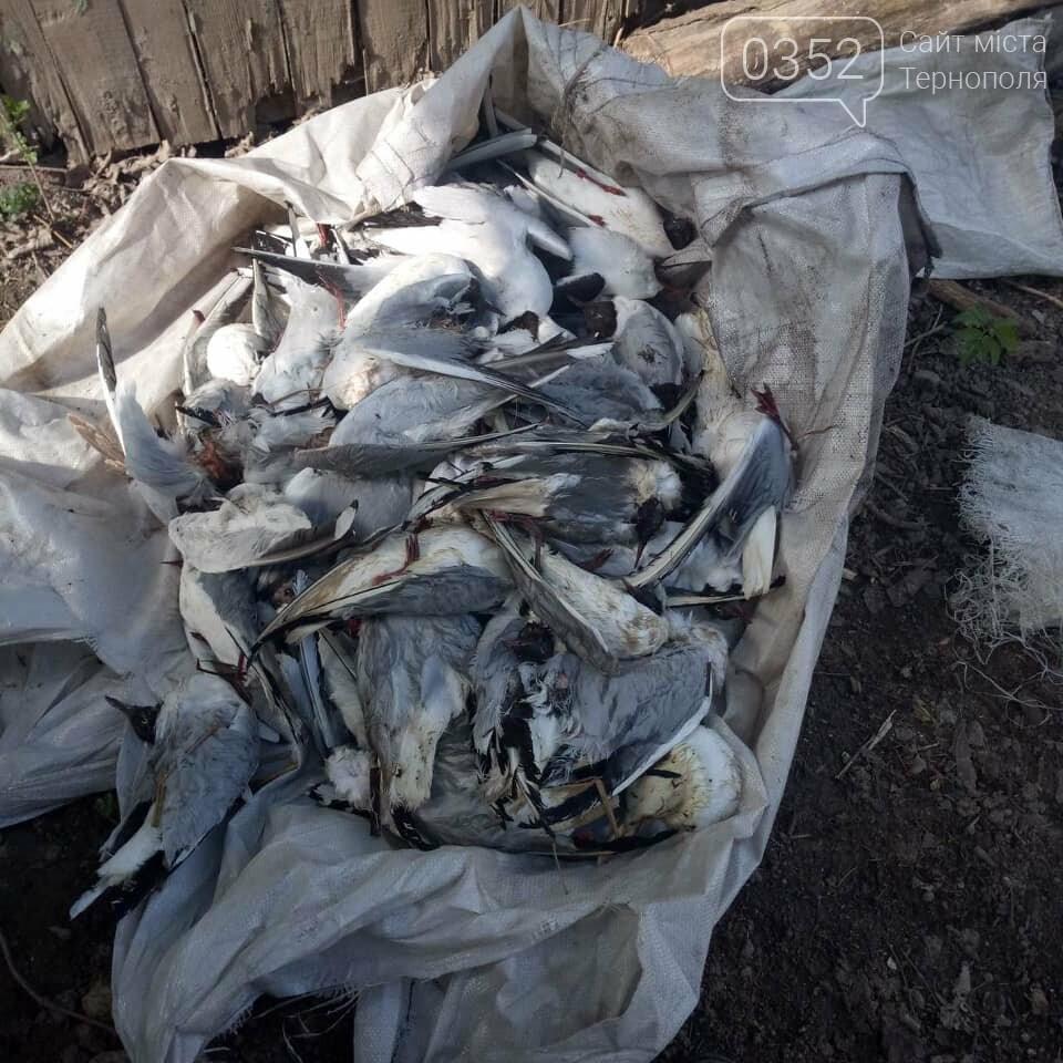 У водоймі, з якої для Тернополя беруть воду, знайдено десятки мертвих чайок (ФОТО), фото-3