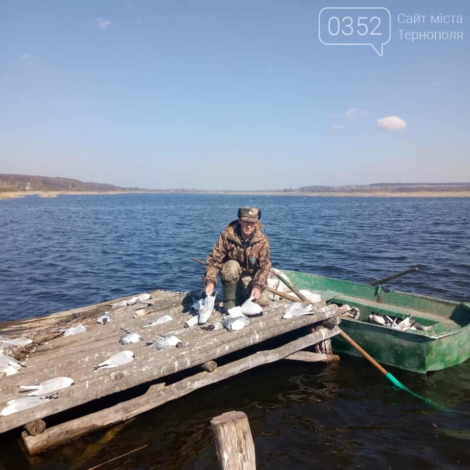 У водоймі, з якої для Тернополя беруть воду, знайдено десятки мертвих чайок (ФОТО), фото-2