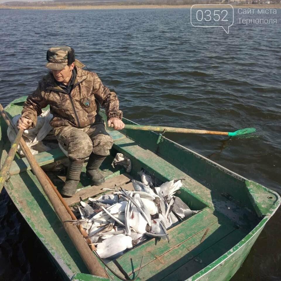 У водоймі, з якої для Тернополя беруть воду, знайдено десятки мертвих чайок (ФОТО), фото-1