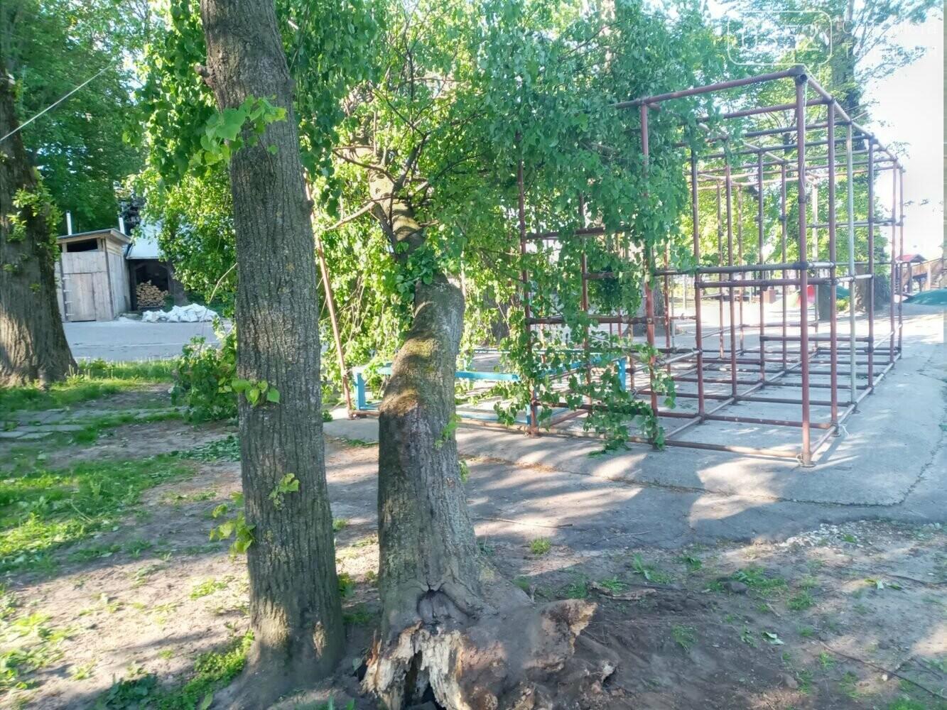 У Тернополі вітер повалив дерево на атракціон у парку імені Шевченка, фото-1