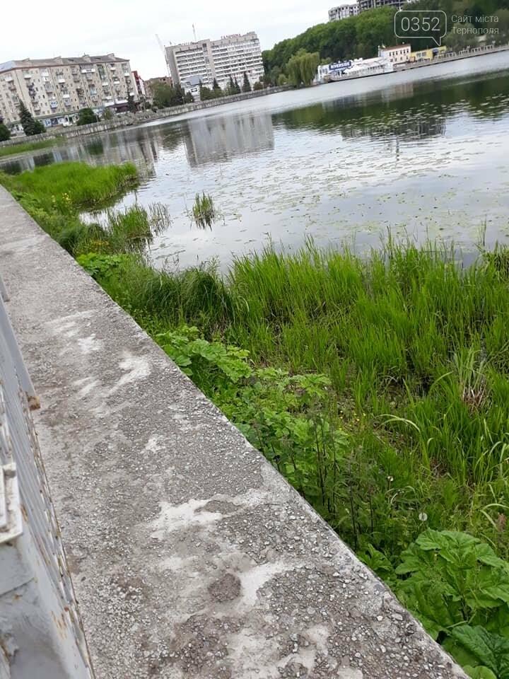Тернополян попереджають про небезпечну рослину на вулицях міста (ФОТО), фото-2