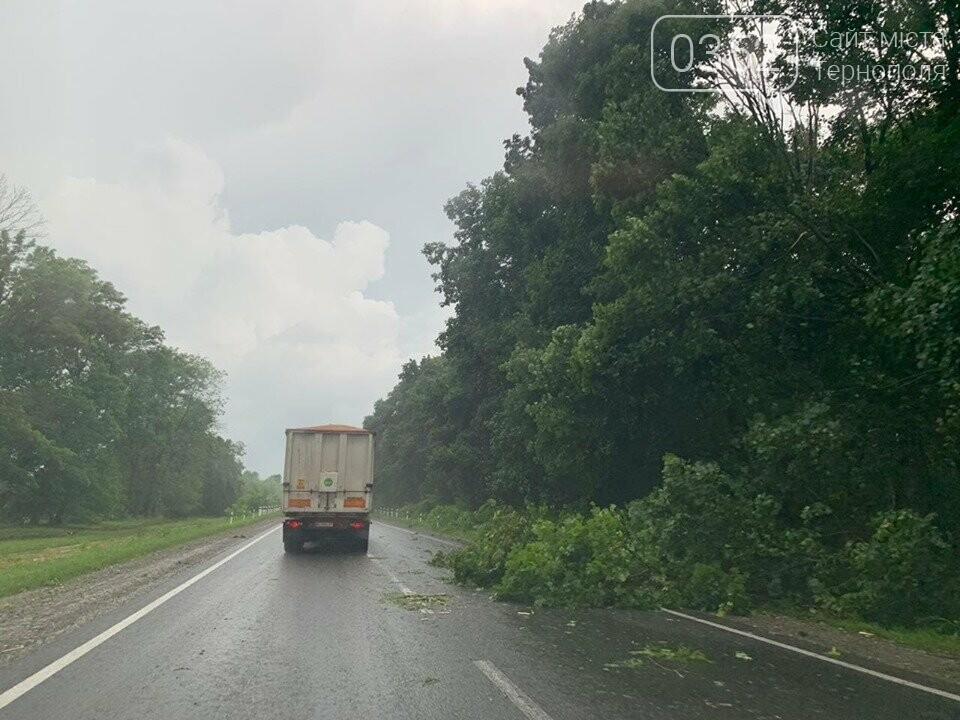 """""""Стихія не вгаває"""": поблизу Тернополя негода повалила дерево на автодорогу (ФОТО+ВІДЕО), фото-1"""
