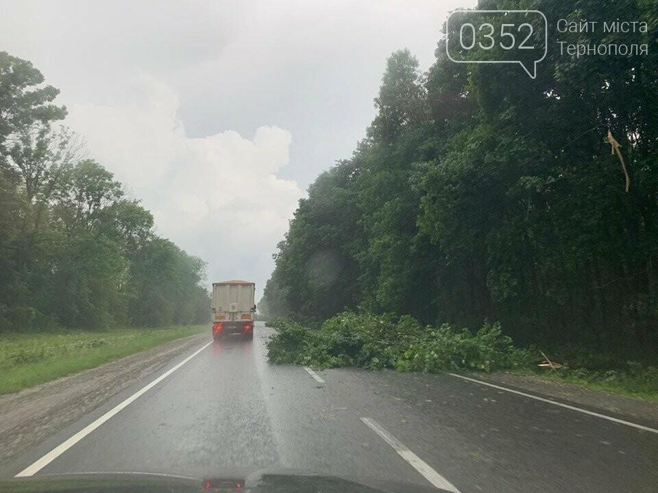 """""""Стихія не вгаває"""": поблизу Тернополя негода повалила дерево на автодорогу (ФОТО+ВІДЕО), фото-3"""