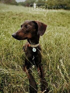 Сучасні технології: у Тернополі завдяки жетону з  QR-кодом родина знайшла свого зниклого пса (ФОТО), фото-1