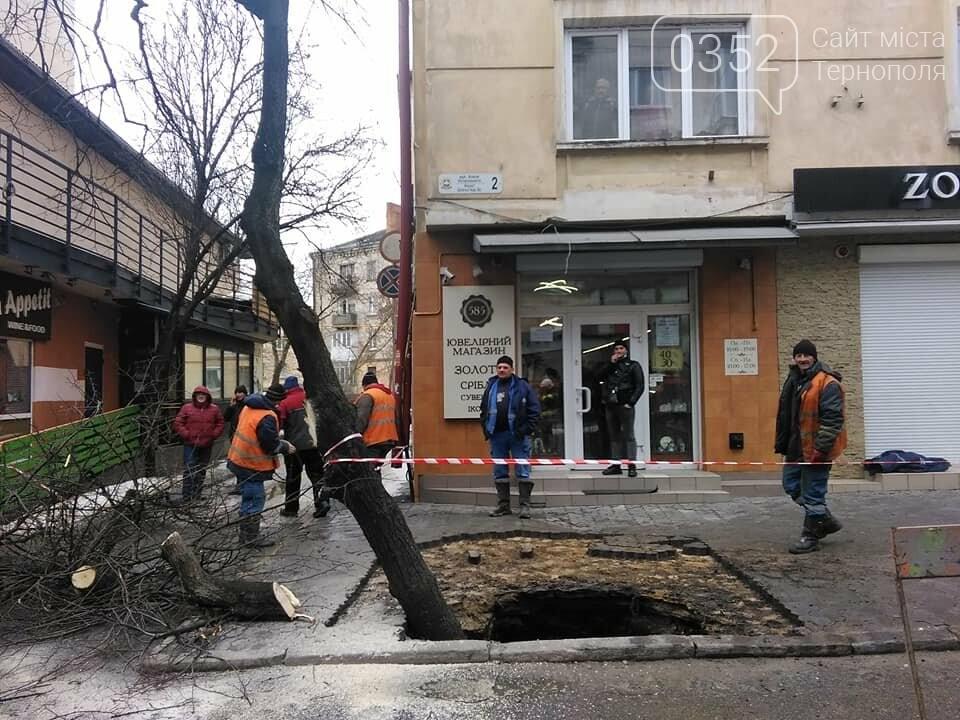 У Тернополі дерево провалилося під асфальт – офіційна причина (ФОТО), фото-1