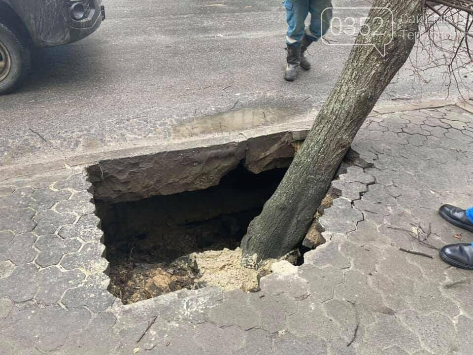 У Тернополі дерево провалилося під асфальт – офіційна причина (ФОТО), фото-4