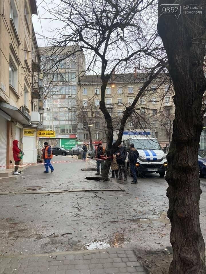 У Тернополі дерево провалилося під асфальт – офіційна причина (ФОТО), фото-2