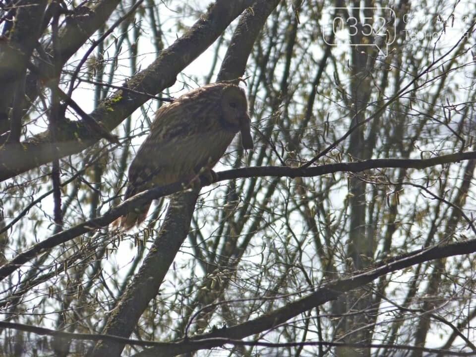 У заповіднику на Тернопільщині оселився рідкісний птах (ФОТО), фото-2