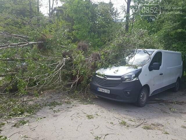 Вітер наробив лиха: на автомобілі, припарковані поблизу лікарні, впало дерево  (ФОТО), фото-3