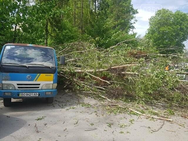 Вітер наробив лиха: на автомобілі, припарковані поблизу лікарні, впало дерево  (ФОТО), фото-1