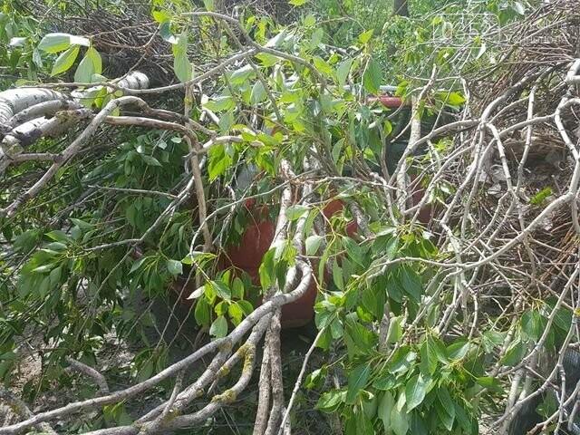 Вітер наробив лиха: на автомобілі, припарковані поблизу лікарні, впало дерево  (ФОТО), фото-2