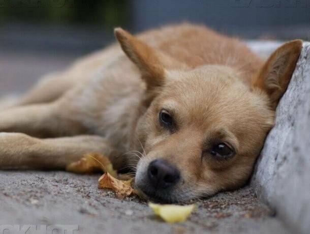 У Городенці рятувальники врятували собаку з каналізації