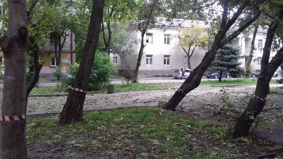 Варварство: поблизу площі Героїв Євромайдану під корінь рубають всі дерева (ФОТО, ВІДЕО), фото-2