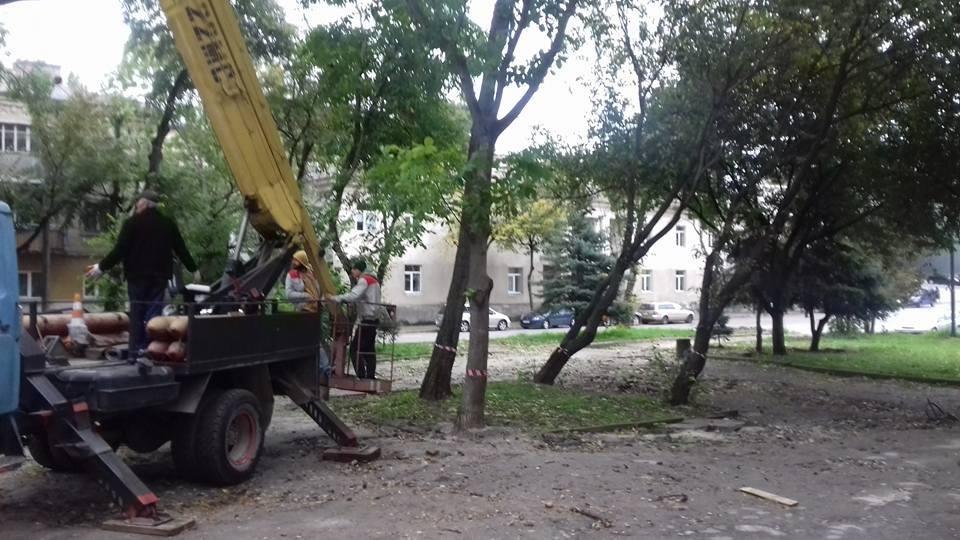 Варварство: поблизу площі Героїв Євромайдану під корінь рубають всі дерева (ФОТО, ВІДЕО), фото-5