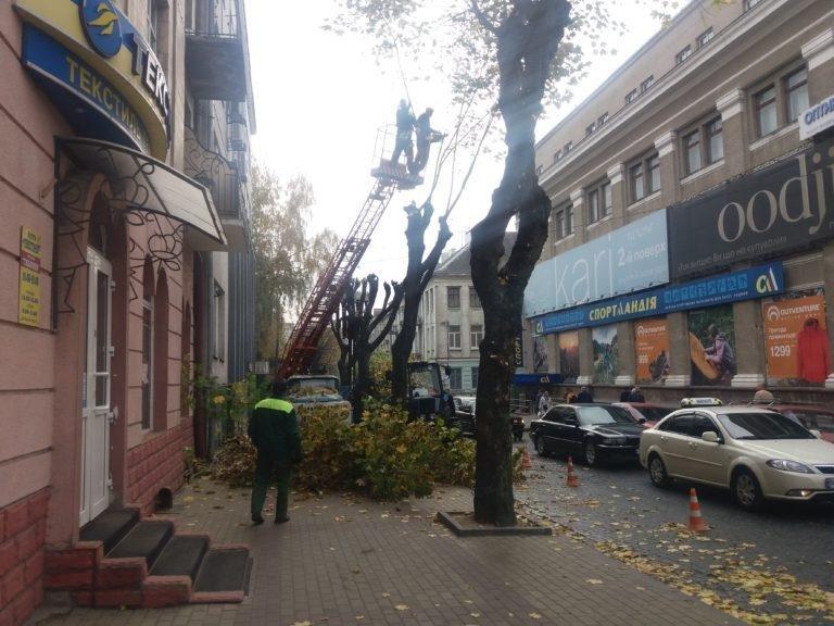 У Тернополі взялися омолоджувати дерева (фото), фото-3