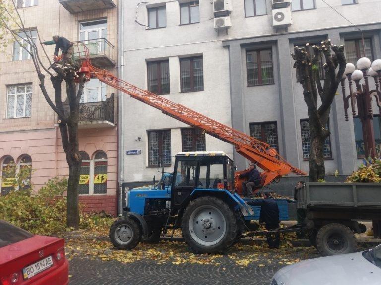 У Тернополі взялися омолоджувати дерева (фото), фото-1