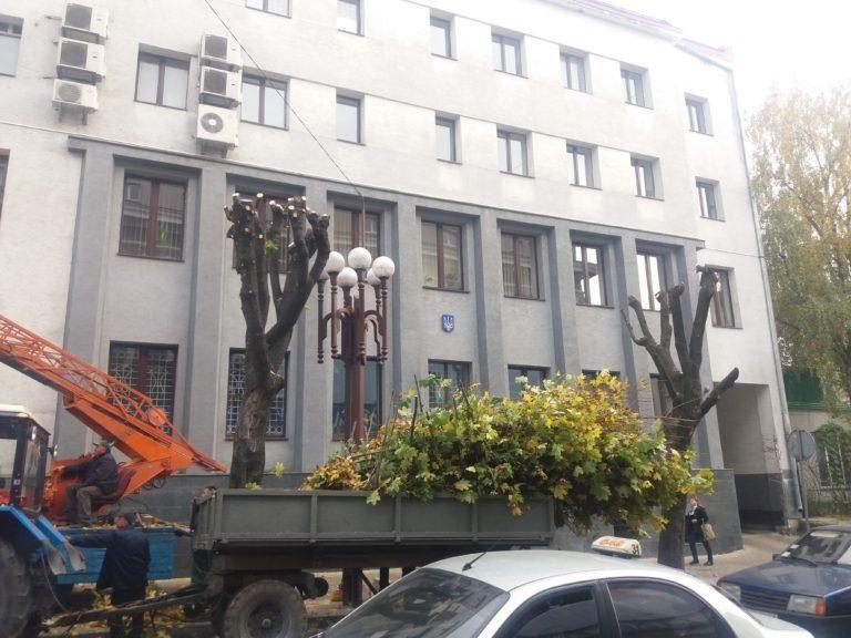У Тернополі взялися омолоджувати дерева (фото), фото-2