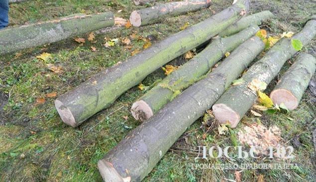 """На Тернопільщині затримали нелегальних """"лісорубів"""" (фото), фото-1"""