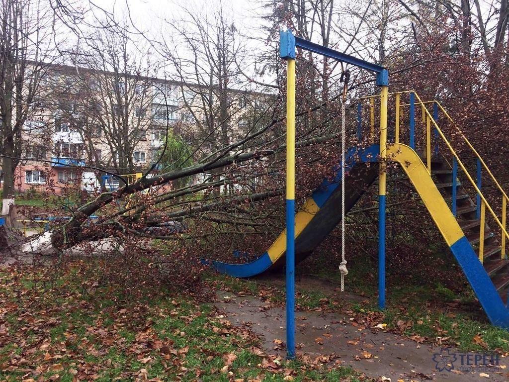У Тернополі на Східному вирване дерево із корінням впало на дитячий майданчик (фото), фото-3