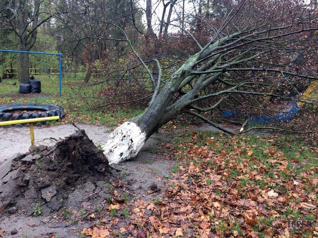 У Тернополі на Східному вирване дерево із корінням впало на дитячий майданчик (фото), фото-1