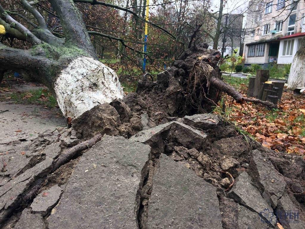У Тернополі на Східному вирване дерево із корінням впало на дитячий майданчик (фото), фото-2