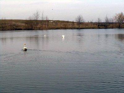 На волю випустили лебедя, якого врятували від лютої зими на Тернопільщині (ФОТО), фото-1