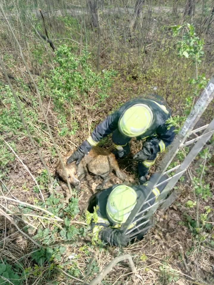 На Тернопільщині врятували собаку, який впав у каналізаційний люк та не міг вибратися (ФОТО), фото-3