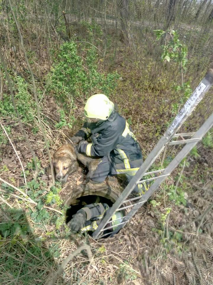На Тернопільщині врятували собаку, який впав у каналізаційний люк та не міг вибратися (ФОТО), фото-2