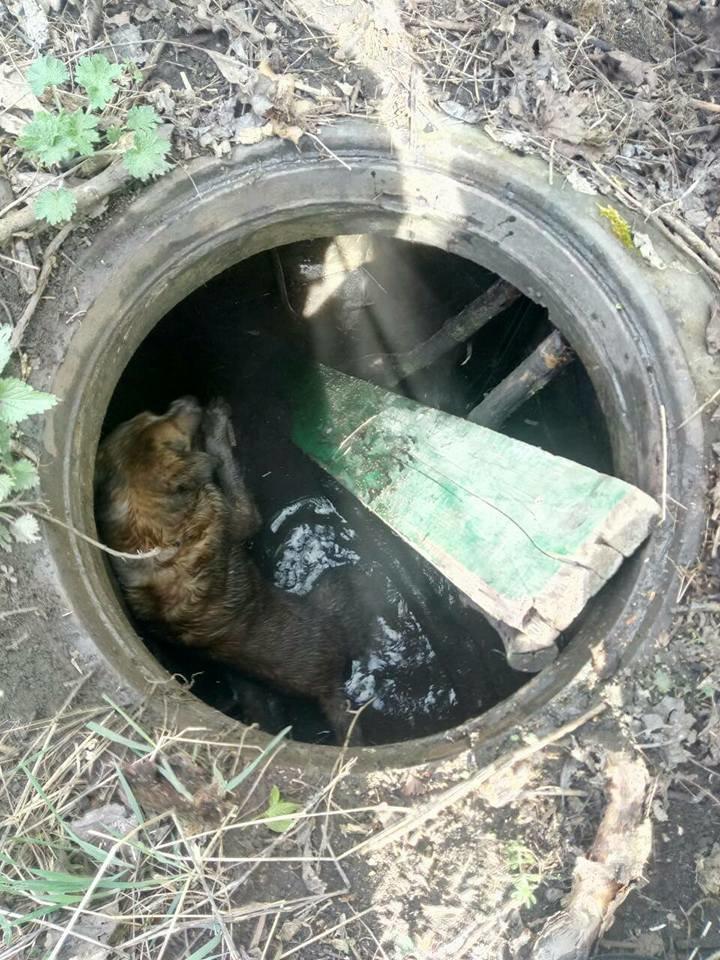 На Тернопільщині врятували собаку, який впав у каналізаційний люк та не міг вибратися (ФОТО), фото-4