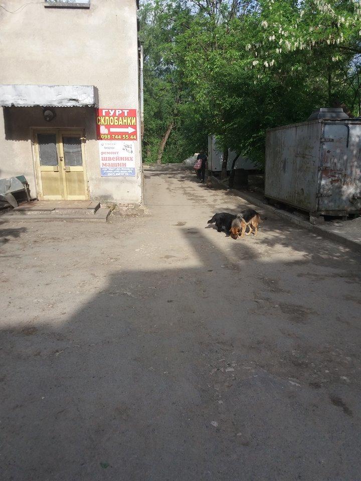 """У Тернополі на """"Дружбі"""" собаки розірвали руку 90-річній бабусі (фото), фото-3"""